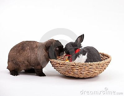 Coelhos de Easter