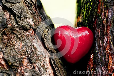 Coeur rouge dans un tronc d arbre. Amour romantique