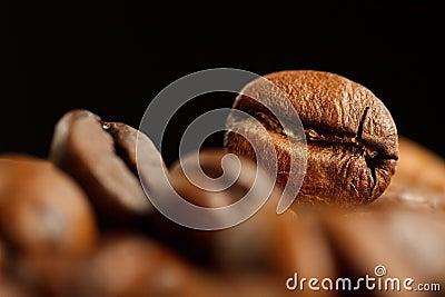 Coffee bean detail