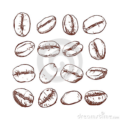 Free Coffee Bean Isolated Hand Drawn Vector, Sketch Of Coffee Beans Royalty Free Stock Image - 72755666