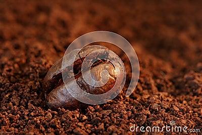 Coffee Bean Macro