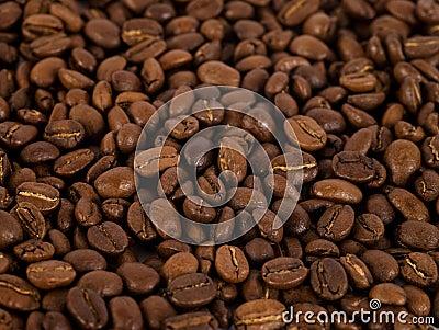 Coffee Beans/1