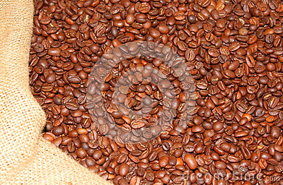 Roasted coffee beans in burlap sack