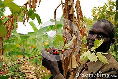 Coffee farmer Editorial Photo