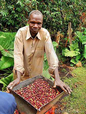 Coffee farmer Editorial Stock Photo