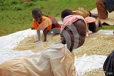 Coffee farmer Editorial Stock Photo