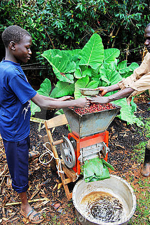 Coffee farmer Editorial Stock Image