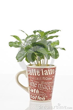 Free Coffee Plant In A Cup Royalty Free Stock Photography - 24789817