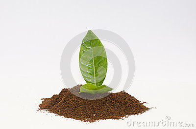Coffee powder with leaf