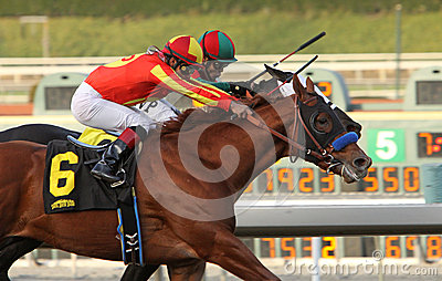 Coil Wins The 2013 San Pasqual Stakes Editorial Stock Image