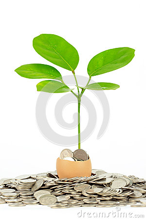 Coins and plant in eggshell