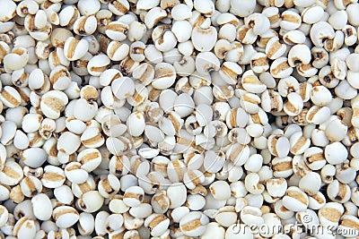 Coix seeds