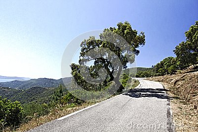 Col du Canadel, Maures Massif at the French Riviera, Southern France