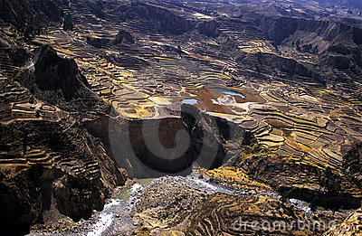 Colca Valey - Inca terrace - Condors home #4