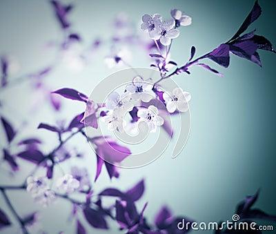 Cold floral