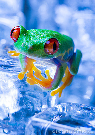 Free Cold Frog Stock Photo - 1890360