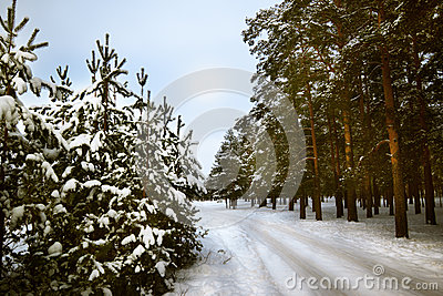 Cold and snowy winter road