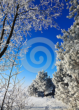 Free Cold Weather Royalty Free Stock Photography - 61858277