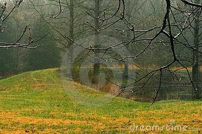 Cold, wet, foggy rural scene