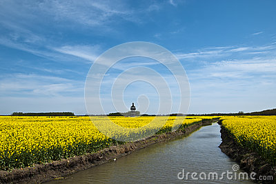 Cole flowers & river