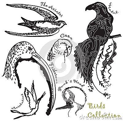 Colección 1 de los pájaros