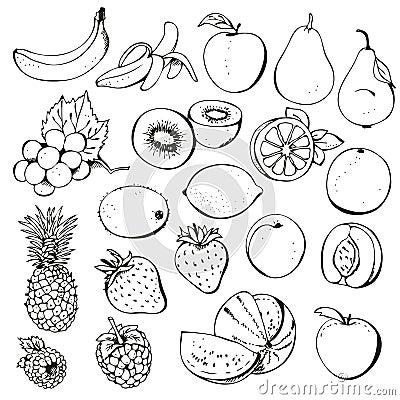 Colección de la baya de la fruta