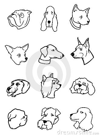 Coleção das cabeças de cão