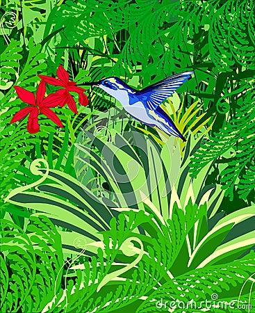 Colibri: vector