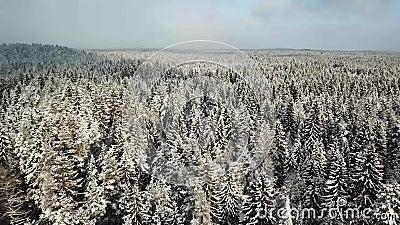 Colina blanca hermosa con los árboles del invierno almacen de video