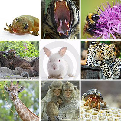 Collage animal