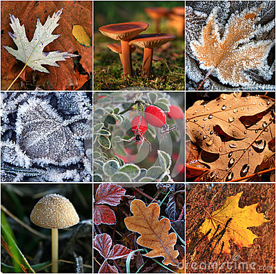 Collage of autumn leaves