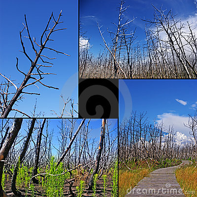 Collage of burned trees