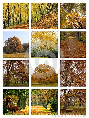 Collage d automne