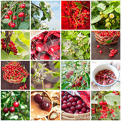 Collage with different berries