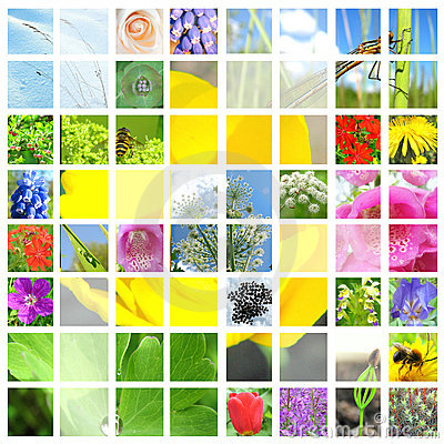 Collage of flowers and herbals