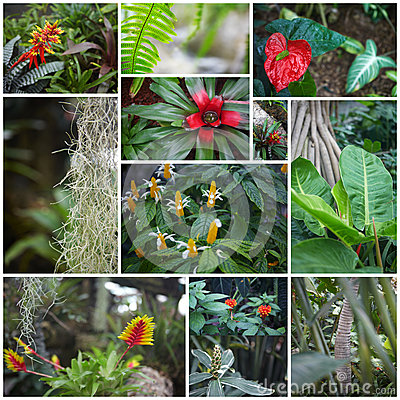Collage. Flowers in jungle