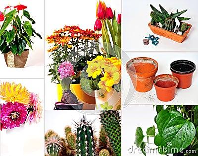Collage garden plants