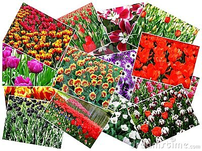 Collage of keukenhof flower garden