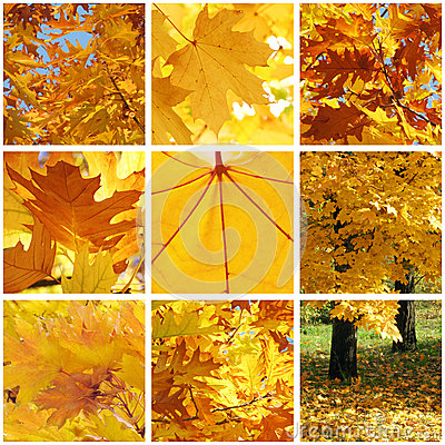 Autumnal collage