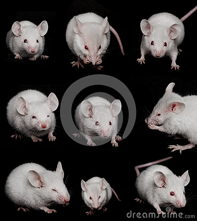 Collage: Little Mouse on a Black background