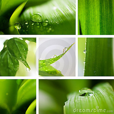 Collage nature green background.