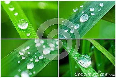 Collage of nature symbols