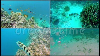 Collage Ocean scenery on shallow coral reef. Underwater video of the ocean. Small fish swim erratically and hidden by.  stock footage