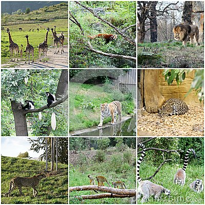 Free Collage Of Different Animals Stock Images - 30257924