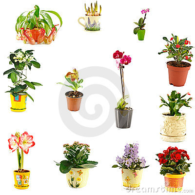 Free Collage Of Indoor Plants Stock Images - 18150154
