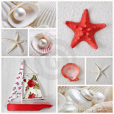 Free Collage Of Sea Stars Royalty Free Stock Image - 18560646