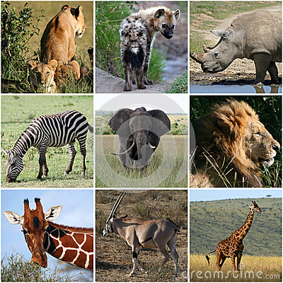 Free Collage Of Wild Animals, Mammals Stock Photography - 47019222