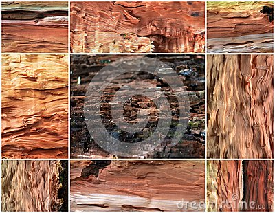 Collage of old pear wood background