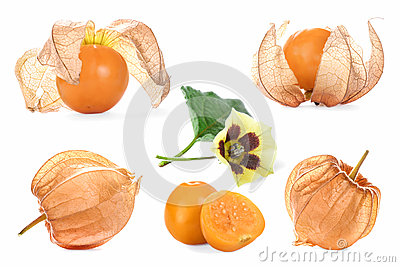 Collage with physalis