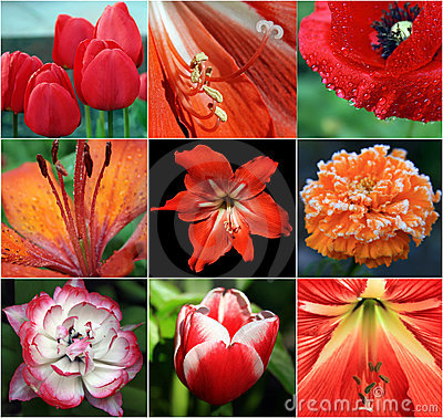 Collage of red flowers